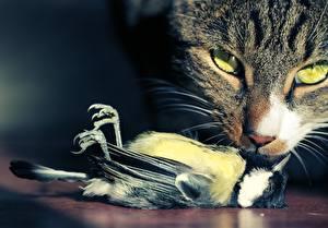 Обои Кошки Птицы Взгляд Мертвый труп Животные фото