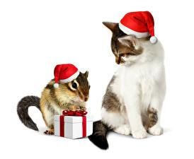 Фотографии Праздники Новый год Кошки Бурундуки Белый фон Шапки Подарки Вдвоем Животные
