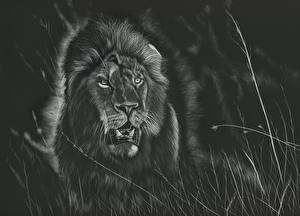 Обои Большие кошки Львы Рисованные Черно белое Черный фон Животные фото
