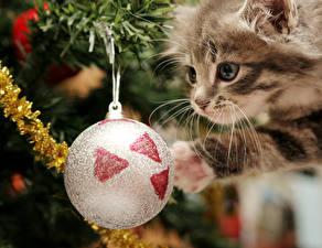 Обои Новый год Праздники Кошки Котята Шарики Усы Вибриссы Взгляд Животные фото