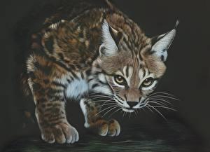 Обои Большие кошки Рыси Рисованные Усы Вибриссы Взгляд Животные фото