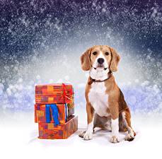 Обои Новый год Собаки Бигль Подарки Снег