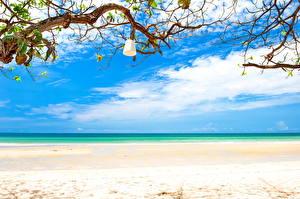Обои Небо Побережье Море Океан Пляж Горизонт Ветки Природа фото
