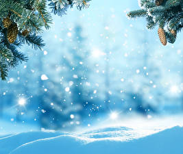 Обои Времена года Зима Ветки Шишки Снег Шаблон поздравительной открытки Природа фото