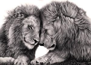 Обои Большие кошки Львы Рисованные Двое Белый фон Животные фото