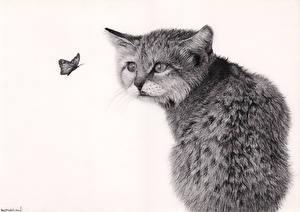 Фотография Кошки Бабочки Рисованные Черно белое Белый фон