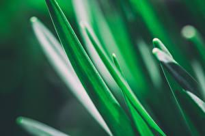 Обои Крупным планом Растения Макро Трава Зеленый Природа фото