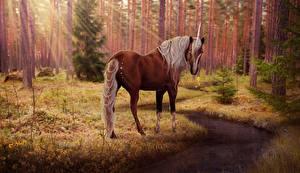 Обои Лошади Единороги Леса Деревья Ручей Лучи света Фэнтези фото