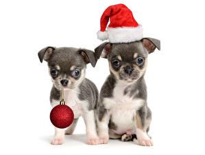 Фотография Новый год Собаки Белый фон Щенок 2 Шапки Шар Животные