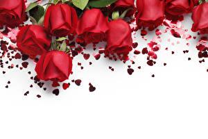 Обои Розы Красный Белый фон Шаблон поздравительной открытки Сердце Цветы фото