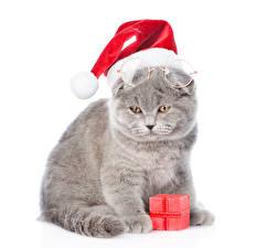 Фотографии Новый год Кошки Белый фон Шапки Подарки Животные