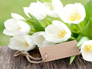 Фото Тюльпаны Белых Цветы