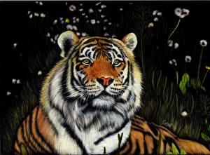 Обои Рисованные Большие кошки Тигры Черный фон Взгляд Животные фото