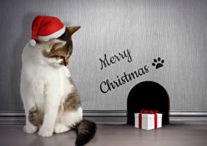 Фотография Рождество Кошки Шапки Подарки Животные