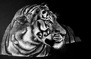 Обои Большие кошки Тигры Рисованные Черно белое Черный фон Животные фото