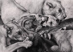 Обои Большие кошки Львы Рисованные Клыки Черно белое Оскал Животные фото