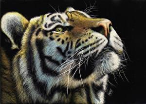 Обои Большие кошки Тигры Рисованные Морда Усы Вибриссы Черный фон Животные фото