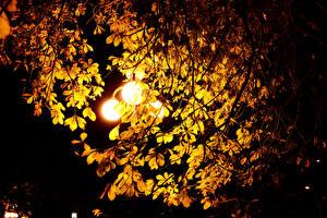 Обои Каштан Ночь Уличные фонари Листья Ветки Природа фото