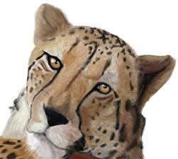 Фото Большие кошки Гепарды Рисованные Голова Смотрит