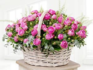 Обои Розы Много Корзинка Розовый Цветы фото