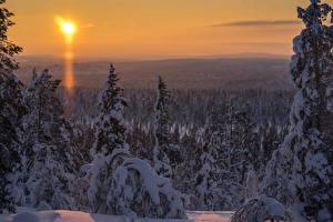 Фото Финляндия Зима Пейзаж Лапландия область Ель Снег Солнце Природа