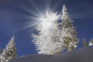 Фотографии Украина Зима Закарпатье Ель Снег Лучи света Природа