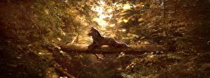 Волки Рисованные Ствол дерева Животные