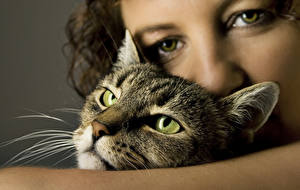 Обои Кошки Взгляд Усы Вибриссы Морда Животные Девушки фото