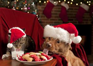 Обои Новый год Собаки Кошки Печенье Молоко Шапки Язык (анатомия) Животные фото