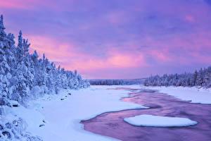 Фото Лапландия область Финляндия Зимние Небо Снег Ель Природа