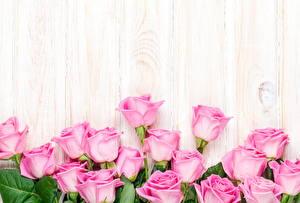 Обои Розы Розовый Шаблон поздравительной открытки Цветы фото