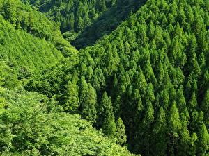 Обои Леса Горы Зеленый Деревья Природа фото