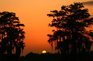 Обои Рассветы и закаты Солнце Силуэт Деревья Природа