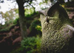 Обои Совообразные Скульптуры Мох Каменные фото