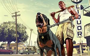 Обои GTA 5 Мужчины Собаки Ротвейлер Оскал Негр Цепь Бейсбольная бита Franklin, Chop Игры фото