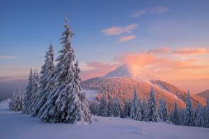 Обои Леса Горы Зима Пейзаж Ель Снег Природа фото