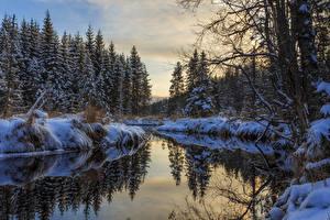 Обои Времена года Зима Реки Леса Ель Снег Природа фото