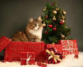 Фотография Новый год Кошки Подарки Коробка Елка Шарики Бантик Животные