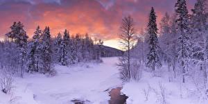 Фото Лапландия область Финляндия Зима Ель Снег Природа
