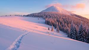 Обои Зима Горы Леса Снег Ель Природа фото