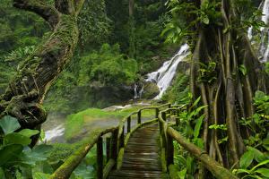 Обои Таиланд Леса Водопады Мосты Ствол дерева Мох Jungle Природа фото