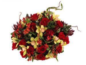 Обои Букеты Розы Орхидеи Белый фон Цветы фото