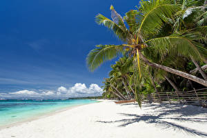 Картинка Тропики Море Небо Лето Пальмы Деревья Пляж