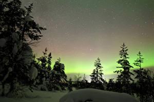 Фотография Финляндия Лапландия область Зимние Небо Звезды Снега Ели Полярное сияние