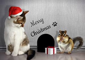Картинка Новый год Кошки Бурундуки Подарки Шапки Английский Животные