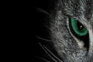Фотография Глаза Крупным планом Кошки Макро Черный фон Животные