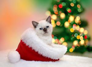 Обои Новый год Кошки Шапки Котята Взгляд Животные фото