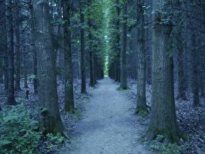 Обои Леса Деревья Тропа Природа фото