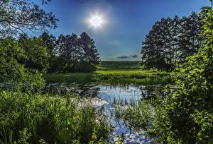 Картинка Украина Деревьев Солнце Траве Болото Poltava