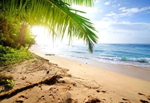 Обои Шри-Ланка Тропики Побережье Волны Море Песок Пляж Природа фото